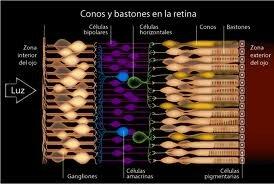 CONS I BASTONS-VISIÓ